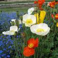 公園の花3