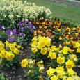 公園の花6