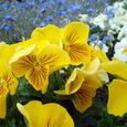 公園の花8
