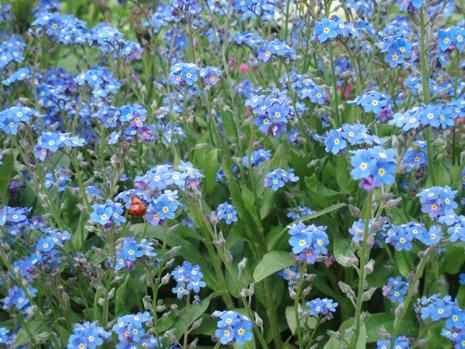 公園の花5