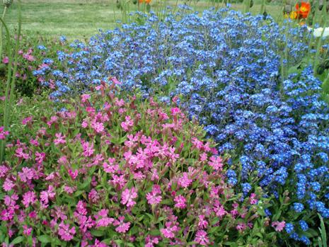公園の花4