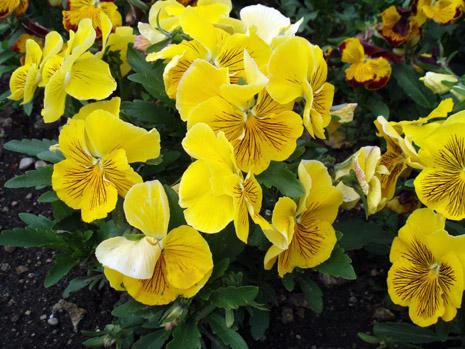 公園の花7