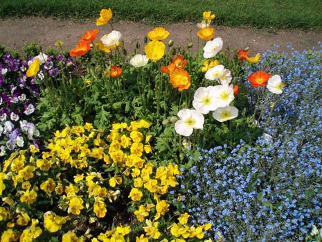 公園の花9