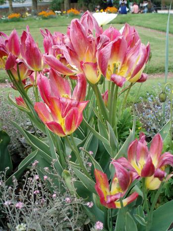 公園の花10